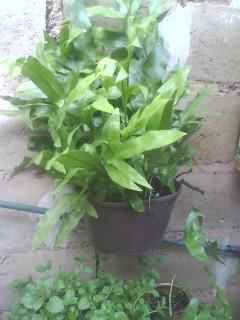 Varias plantas ornamentales y helechos for Plantas ornamentales helechos