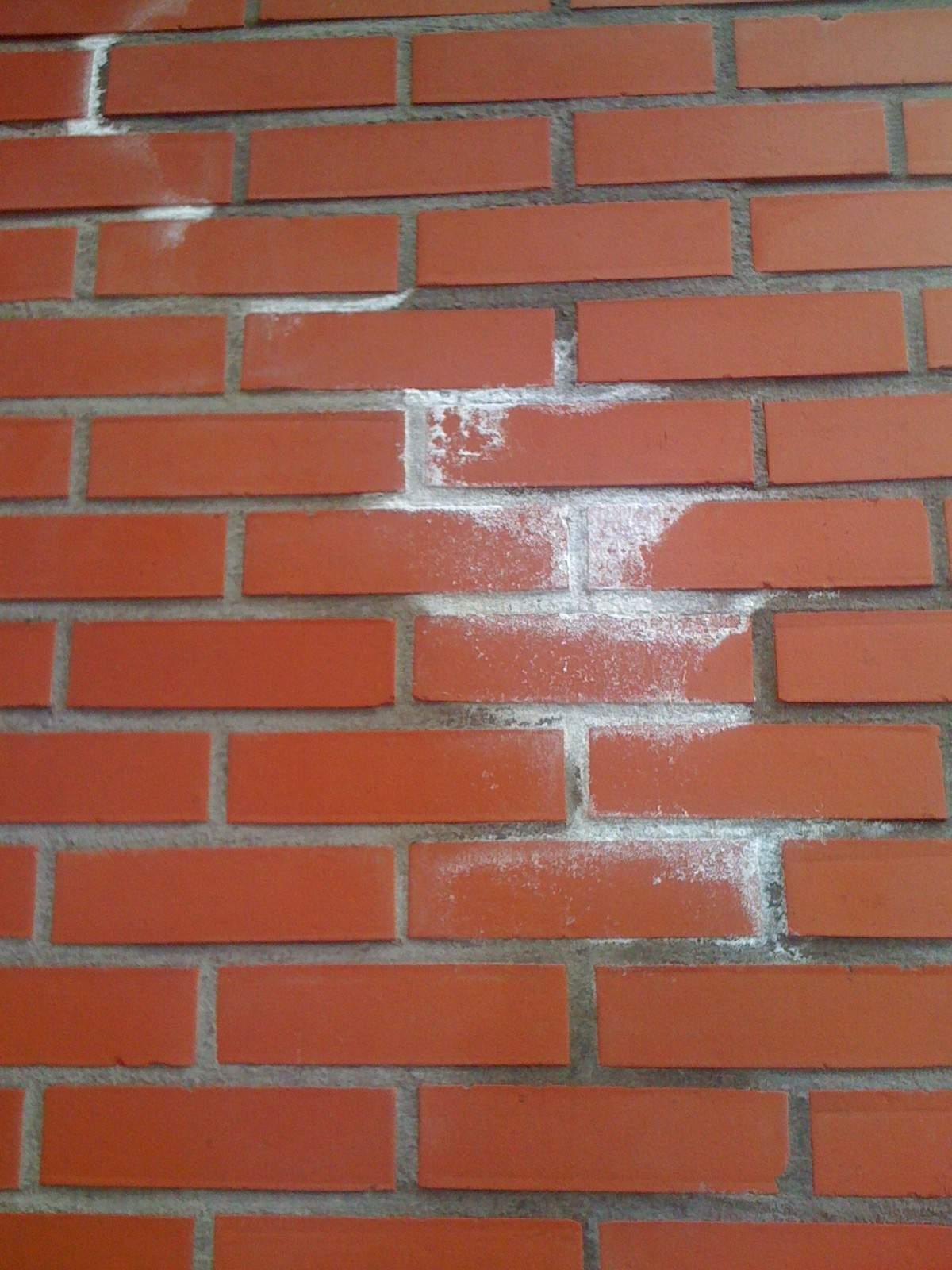 Manchas blancas en la pared del jard n es un hongo fotos - Manchas blancas en la pared ...