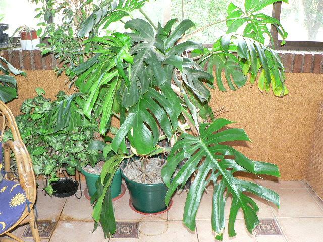 Venta de plantas de interior baratas for Plantas baratas