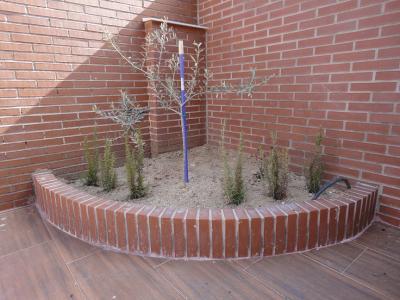 Ayuda para decorar mi casa y el tipo de plantas a poner for Ayuda para decorar mi casa