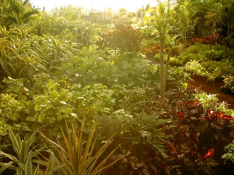 Jardiner a y patios de m xico comentarios sobre nuestras for Jardineria y plantas