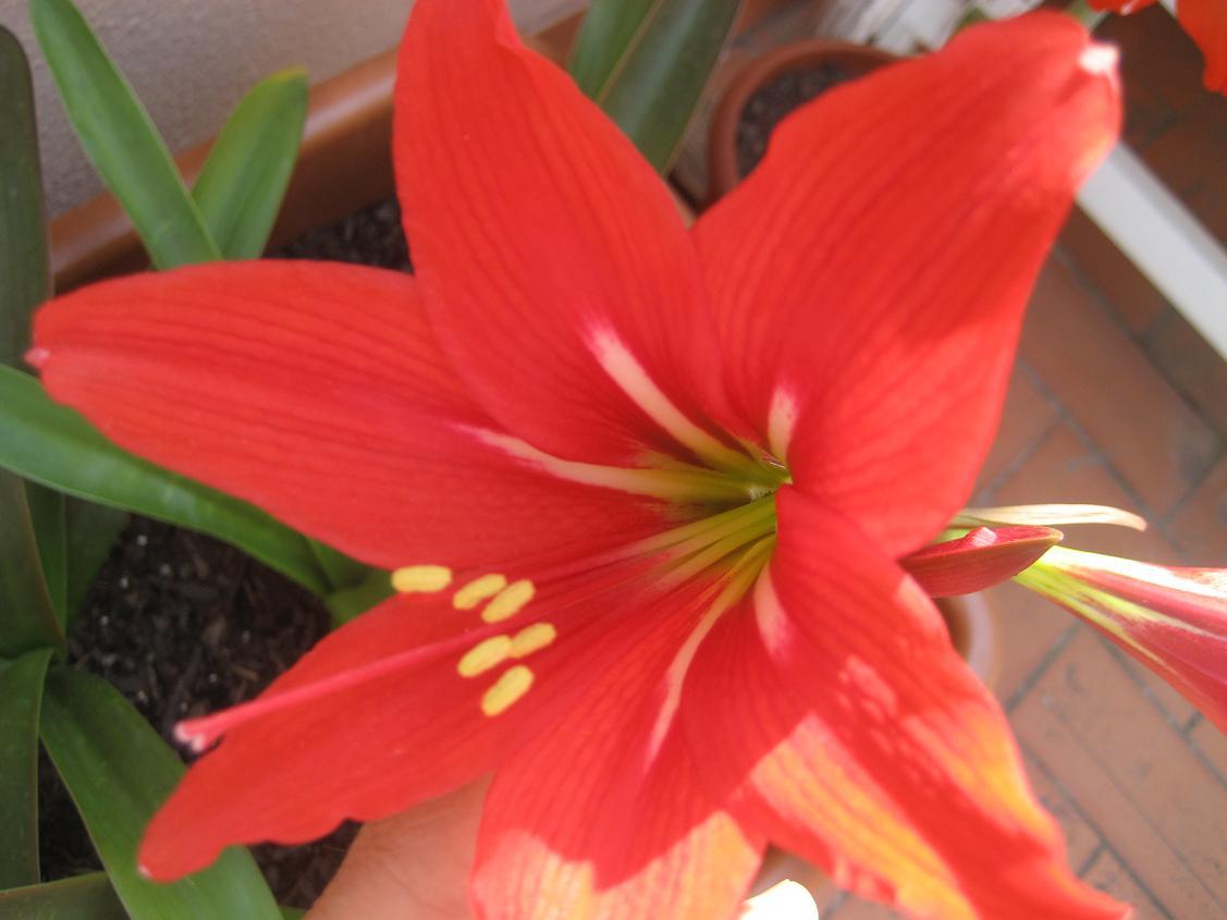 Diferentes tipos de flores related keywords diferentes - Tipos de plantas ...