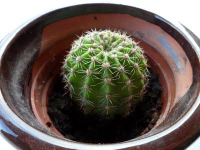 M s cactus y acabo con mi colecci n for Tipos de cactus y sus nombres comunes