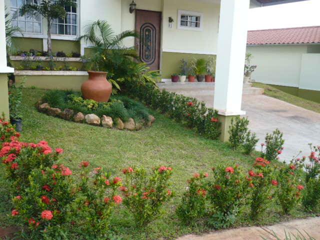 Ixoras crecimiento estancado for Modelos de patios y jardines