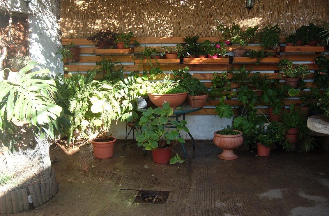 Fotos de nuestras plantas compa eras de nuestras queridas - Macetas para colgar ...