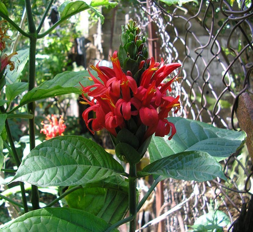 Flores de mi jard n iii for Infos jardin