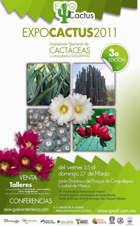 Iii expo nacional de cactaceas y otras suculentas for Cactaceas y suculentas