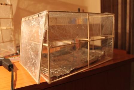 Mini invernadero casero y f cil de fabricar que he hecho - Mini invernadero casero ...