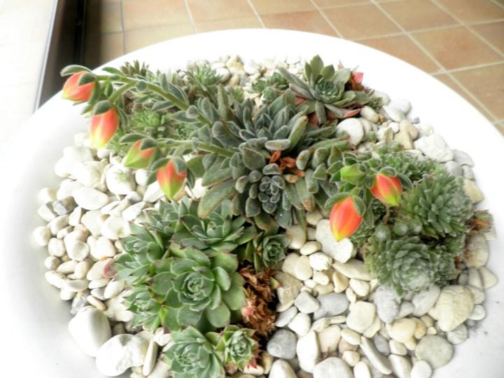 Plantas para una jardinera de obra de 1 20 x 1 40 m for Que plantas poner en una jardinera