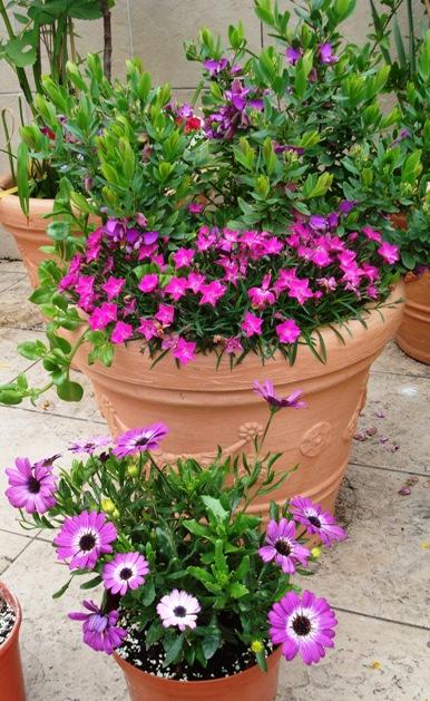 Fotos de nuestras plantas en terrazas y balcones for Infos jardin