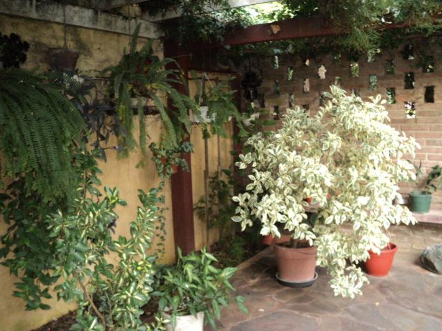 Jardiner a fotos y comentarios sobre los cuidados de for Jardineria fotos