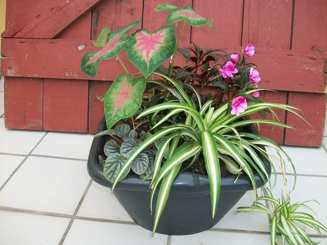 Fotos de nuestras plantas y patios de m xico for Infos jardin