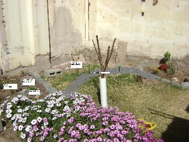 Ideas para un rinc n en mi jard n con sol todo el d a en - Ideas para mi jardin ...