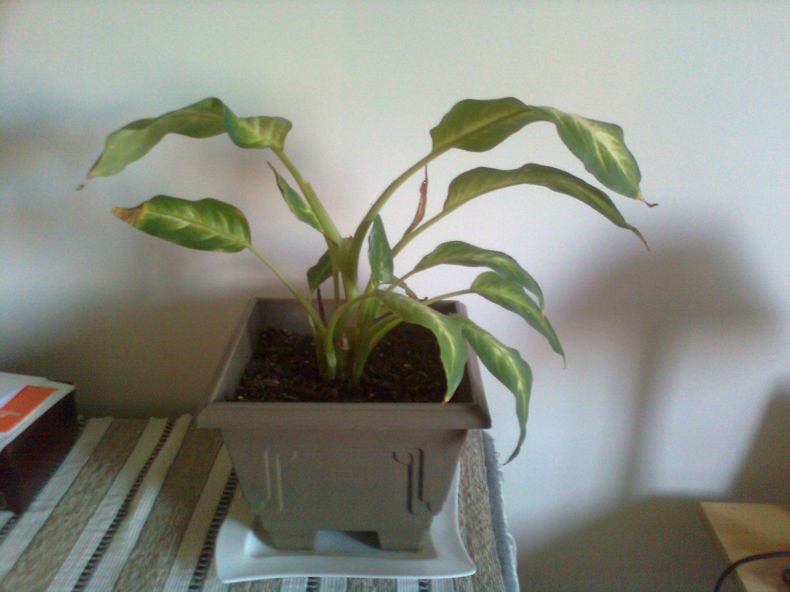 Varias de mis plantas de interior no consigo que luzcan - Plantas de interior bonitas ...
