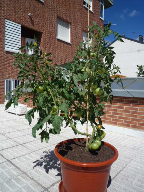 Medidas de la maceta en tomate casa dise o - La casa de la maceta ...